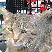 Adopt A Pet :: Anchor - Memphis, TN