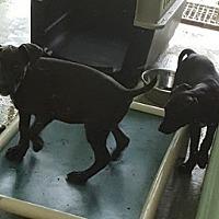 Adopt A Pet :: Bingo - Marianna, FL