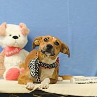 Adopt A Pet :: ELLIE - Poteau, OK