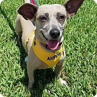 Adopt A Pet :: Dobby - Royal Palm Beach, FL