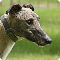 Adopt A Pet :: Howard - Portland, OR
