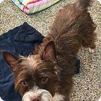 Adopt A Pet :: Fletch - Thousand Oaks, CA