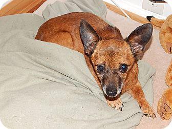 Chihuahua/Dachshund Mix Dog for adoption in Mechanicsburg, Pennsylvania - Milo