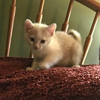 Adopt A Pet :: Micka - Lovingston, VA
