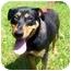 Photo 2 - Rottweiler Mix Dog for adoption in Milledgeville, Georgia - Roxy