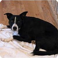 Adopt A Pet :: Jackson - Longmont, CO
