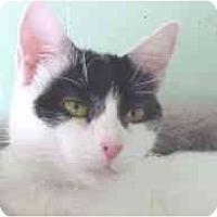 Adopt A Pet :: Maria - Lunenburg, MA