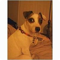Adopt A Pet :: Jackie in AR - Arkansas City, TX