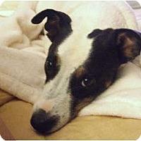 Adopt A Pet :: LUCAS - Scottsdale, AZ