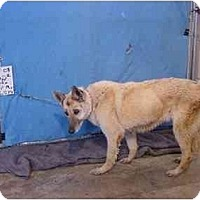 Adopt A Pet :: Brooke/Adopted! - Zanesville, OH
