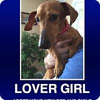 Adopt A Pet :: Kaylynn - Morrisville, PA
