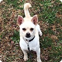 Adopt A Pet :: Ginger - Greenville, SC