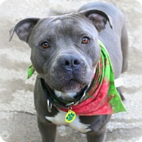 Adopt A Pet :: Boo Berry - Eugene, OR