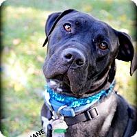 Adopt A Pet :: Emmajane - Independence, MO