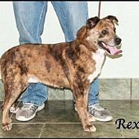 Australian Cattle Dog/Catahoula Leopard Dog Mix Dog for adoption in Ada, Oklahoma - Rex
