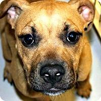 Adopt A Pet :: Diva - McKinney, TX
