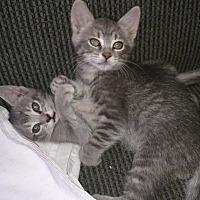 Adopt A Pet :: Tilly - Atlanta, GA
