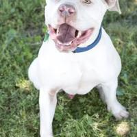 Adopt A Pet :: Ted - Fresno, CA