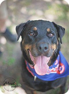 Rottweiler Dog for adoption in Houston, Texas - Ethan