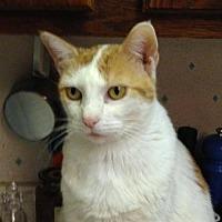 Adopt A Pet :: Marigold - Fort Lauderdale, FL