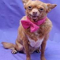 Adopt A Pet :: Lollipop - Wellington, FL
