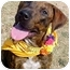 Photo 1 - Pit Bull Terrier Mix Dog for adoption in Huntington, New York - Kirby