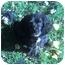 Photo 2 - Cocker Spaniel Mix Dog for adoption in Osseo, Minnesota - Henry