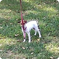 Adopt A Pet :: 4 month old puppy girl - Houston, TX