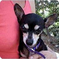 Adopt A Pet :: Damien - Chimayo, NM