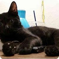Adopt A Pet :: Jack - Davis, CA