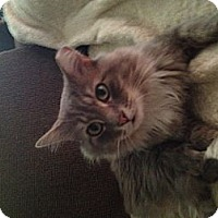 Adopt A Pet :: Milo - Columbia, MD