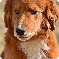 Adopt A Pet :: Owen - New Canaan, CT