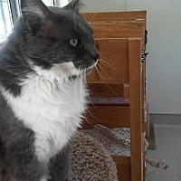 Adopt A Pet :: Cloudy - El Cajon, CA