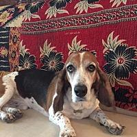 Adopt A Pet :: Buddy - Folsom, LA