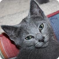 Adopt A Pet :: Maverick (LE) - Little Falls, NJ