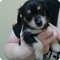 Adopt A Pet :: Evita - Thousand Oaks, CA