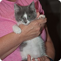 Adopt A Pet :: Patches - New Martinsville, WV