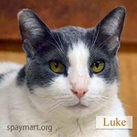 Adopt A Pet :: Luke - Metairie, LA