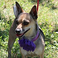 Adopt A Pet :: Talley - Olympia, WA