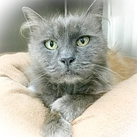 Adopt A Pet :: Curly - Webster, MA