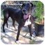 Photo 1 - Great Dane Dog for adoption in Austin, Texas - Lucie