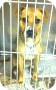 Retriever (Unknown Type) Mix Dog for adoption in Youngstown, Ohio - Marilu
