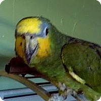 Adopt A Pet :: Bob - Red Oak, TX