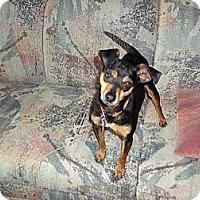 Adopt A Pet :: Kiko - Nashville, TN