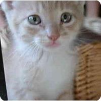 Adopt A Pet :: Tomato - Davis, CA