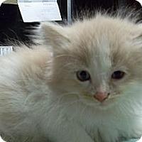 Adopt A Pet :: Purina - Acme, PA