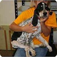 Adopt A Pet :: Rupert - Albuquerque, NM