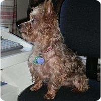 Adopt A Pet :: Weston - Conroe, TX