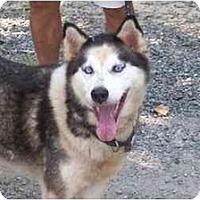 Adopt A Pet :: Regina - Alexandria, VA