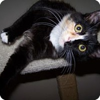Adopt A Pet :: K-Hirsh3-Crystal - Colorado Springs, CO